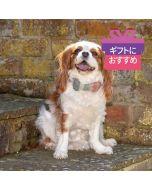 <Mutts & Hounds> 犬用ツイード蝶ネクタイ  ピンク×グリーン